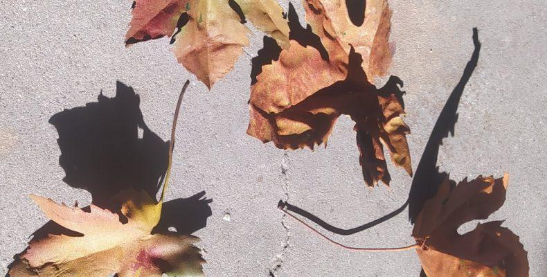 réplica hojas