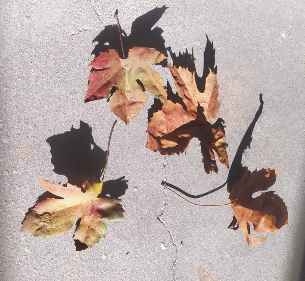 Réplica hojas 1