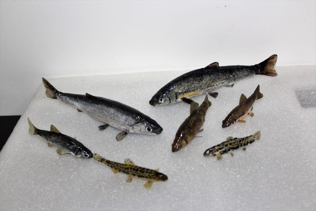 Réplica peces 2