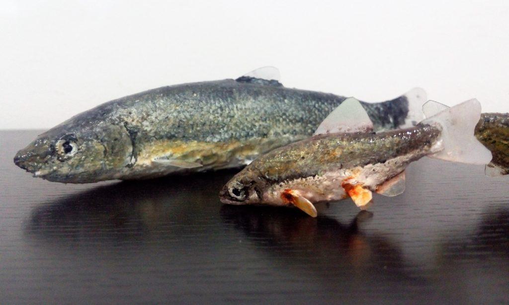 Réplica peces 1